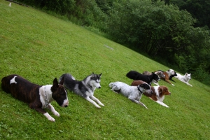 education canine Nord, dog sitter et dressage de chiens et