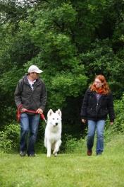 Educateur canin à Lille et région Nord, dressage chiens et